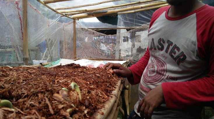 Budidaya Durian : Tips dan Teknik Tanam Durian Cepat Berbuah dan Rasa Enak Daging Tebal