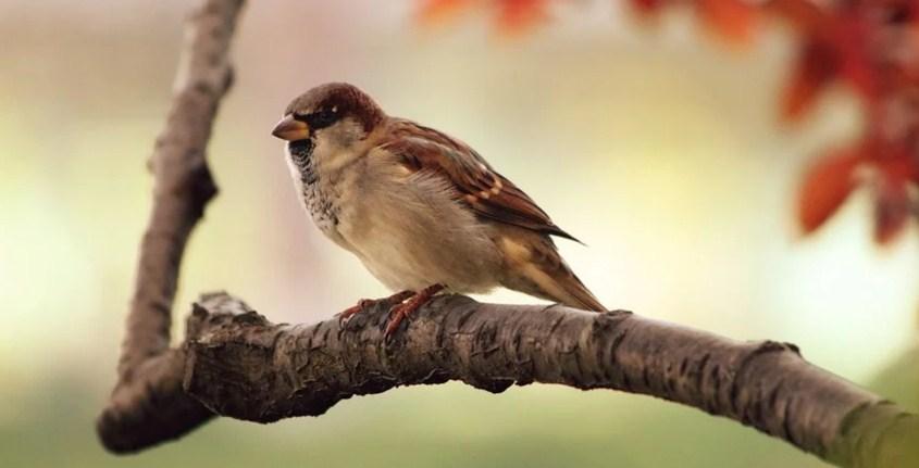 Tips Menjual Burung via Online atau Soial Media